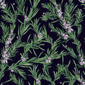 Natural seamless pattern with green rosemary plants and blooming flowers on black background. Wild herb hand drawn in