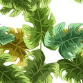 Natural seamless pattern with green tropical leaves or scattered exotic foliage of jungle plants on white background. Hawaiian