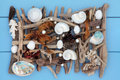 Natural seaside treasure sea shell seaweed pearl and driftwood abstract collage on wooden blue background Stock Images