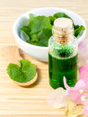 Natural Spa Ingredients . - Centella asiatica  Urban, Asiatic Pe Royalty Free Stock Photo