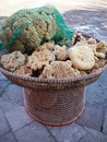 Natural sponges Stock Images