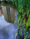 Natural style landscaping for condominium pond Royalty Free Stock Photo