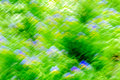 Natural summer blurred outdoors bokeh background with bokeh of green grass, blue-yellow flowers and sun rays, bit like Royalty Free Stock Photo