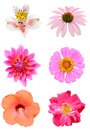 Natural summer flowers Royalty Free Stock Photo