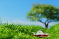 Natural tea on green grass Stock Photos