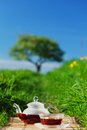 Natural tea on green grass Stock Image