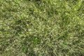 Natural texture bristly grass steppe Stock Images