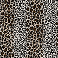 Natural textured leopard skin Royalty Free Stock Photo