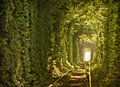 Natural Tunnel Of Love Formed ...