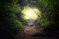 Túnel en selva bosque