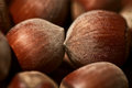 Natural, vegetable proteins - hazelnuts Stock Image