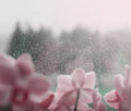 Natural water drops on window glass with green background and with flower Stock Photos