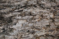 Natural Weathered Grey Taupe Brown Cut Tree Stump Texture, Large Horizontal Detailed Wounded Damaged Vandalized Gray Background