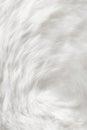 Natural white fur background closeup view Stock Image