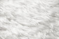 Natural white fur background closeup view Stock Photography