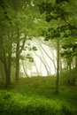 Natural window, forest frame Royalty Free Stock Photo