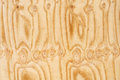 Natural wooden background texture of knots Royalty Free Stock Photos