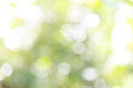 Nature Abstract Bokeh Background