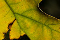 Nature abstract epidermis cells and veins of a dying leaf close look at Stock Photo