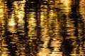Nature Abstract: Golden Rippled Reflections in the Sunset Lit Pond Royalty Free Stock Photo