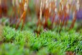 Nature abstract macro close up of tiny green plant and plant stalks Royalty Free Stock Photos