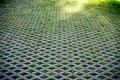 Nature Abstract Small Plants in Grid Pattern Royalty Free Stock Photos