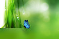 Nature background abstract with butterfly Royalty Free Stock Photo