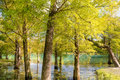 Nature background of autumn forest Royalty Free Stock Images