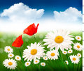Nature background with beautiful flowers Stock Images