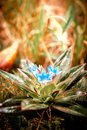 Close up image of beautiful wild flower surreal color