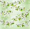 Nature background with blossoming tree branches. Royalty Free Stock Photo