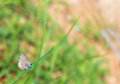 Nature background with butterfly Royalty Free Stock Photo