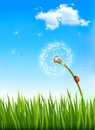 Nature background with a dandelion and a ladybug vector Stock Photography