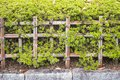 Nature background with detail of bamboo fence Royalty Free Stock Photo
