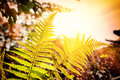 Nature background with fern leaves at sunset Royalty Free Stock Photo