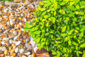 Nature background. fresh wet green leaf with curve rock Royalty Free Stock Photo