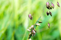 Nature background grass foliage macro shot of against a bright blurred Stock Photo
