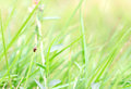 Nature Background Of Grass And...
