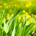 Nature background with grass leaves Stock Photos