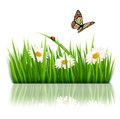 Nature background with green grass and flowers vector Royalty Free Stock Photography