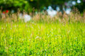 Nature background green grass in spring Royalty Free Stock Photography