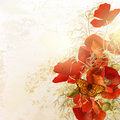 Nature background with poppy flowers Royalty Free Stock Photo