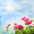 Nature background with red daisies over blue sky Royalty Free Stock Photo