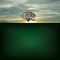Nature Background With Silhoue...