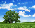Nature Background - Sky, Grass...