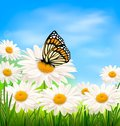 Nature background with spring daisy flower and butterfly vector illustration Stock Photo