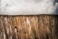 Nature background of stump with snow on it close up view old contrast two textures spongy texture and wooden fibres and Stock Photos