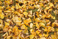 Abstract background of yellow autumn leaves on the grass Royalty Free Stock Photo