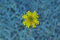 Nature backgrounds yellow flower with blue background photo of Stock Photo