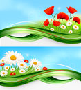 Nature banners with summer daisies and poppies Stock Images